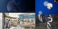 【桃園】與企鵝相遇 「 Xpark水族館 」隆重開幕!